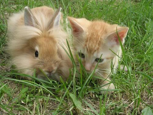 bunny_kitten