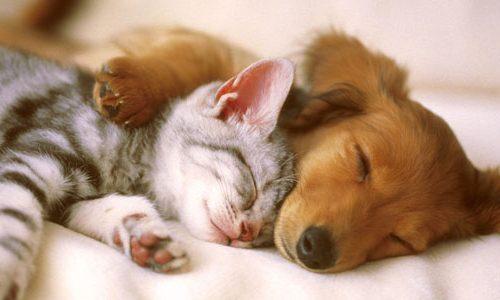 Eliminiamo l'odore di cane e gatto con semplici trucchi.