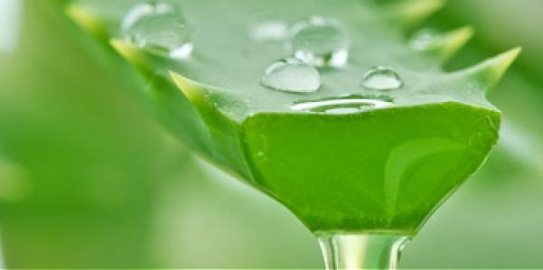 Aloe Vera e Arborescens: la pianta della salute